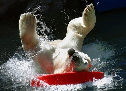 mondego surf